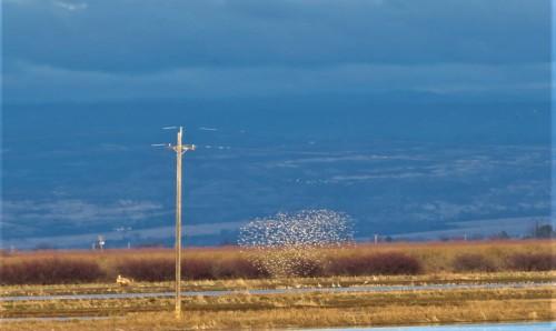 SILVER BIRDS (2)