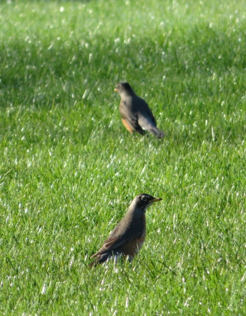 2 in grass (2)