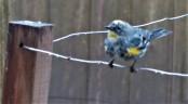 auddier-wire (2)