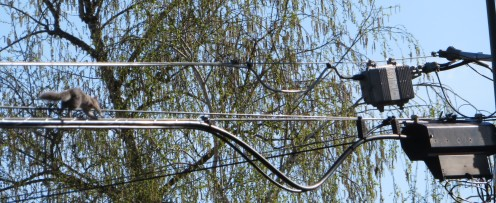 wire2 (2)