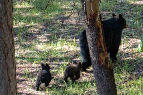 ashland bears