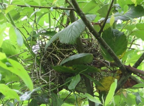 bhg nest-anlk (2)