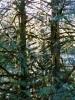 sunlight trees (2)