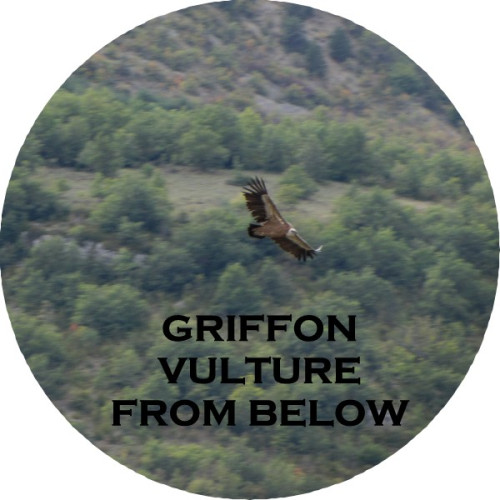 grffn-vultrs7-from-below