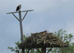 o-nest (2)