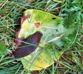 slug2 (2)