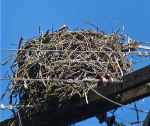 wl osprey (2)