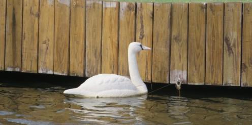 goose8-21 (2)