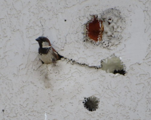 sparo hole (2)