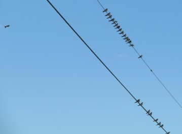 vgsw line (2)